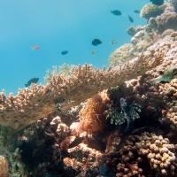 Подводное_34