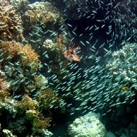 underwater art_58