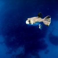 underwater art_68